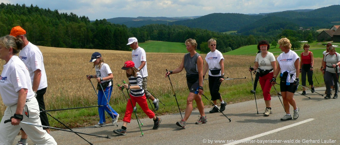 nordic-walking-treff-wald-bewegung-fitness-1400